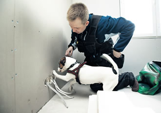 Possible moisture damage can be inspected by specialised engineering companies or even trained dogs.
