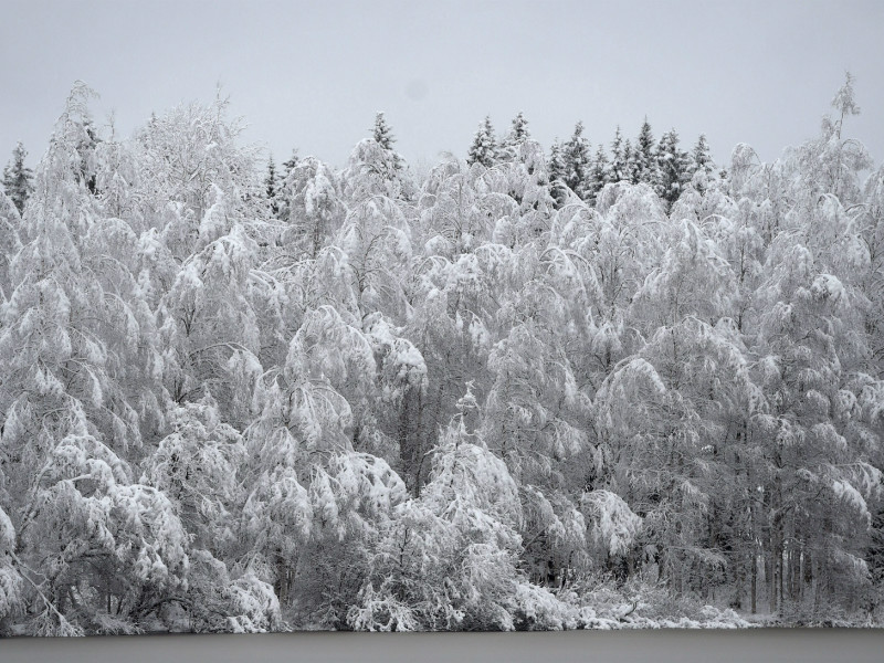 The European Commission's so-called winter package could have, at worst, dealt a heavy blow to bio-economy development and the utilisation of forest resources in Finland, says Petri Sarvamaa (NCP), a Member of the European Parliament.