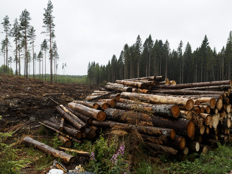 A total of 78 million cubic metres of roundwood was felled from Finnish forests in 2018, reports the Natural Resources Institute (Luke). (Roni Rekomaa – Lehtikuva)