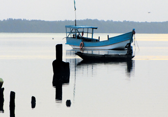 Bird watching in Gambia starts at dawn, continues throughout the day, and ends late at night.