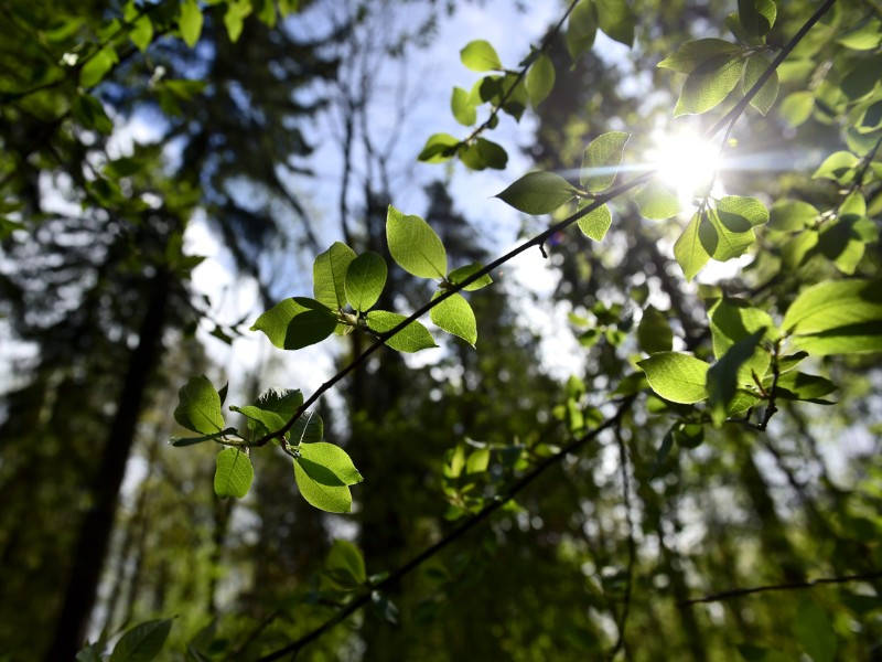 HS: Carbon-neutrality goal more difficult in light of new carbon sink calculations