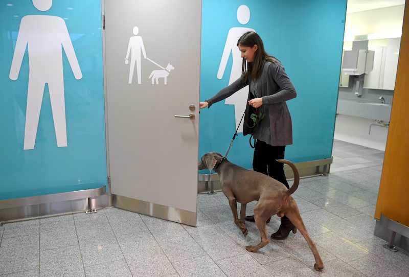 Moritz the Weimaraner enters the dog toilets in Helsinki-Vantaa Airport (Image: Lehtikuva)