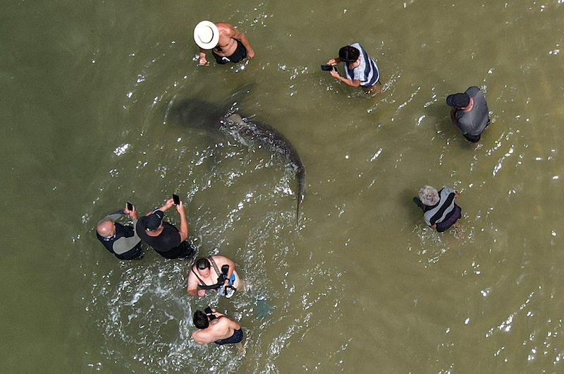 This picture taken on April 20, 2021 shows an aerial view of people using their phones and cameras to film a shark swimming past in the shallow Mediterranean Sea water off the Israeli coastal town of Hadera north of Tel Aviv. LEHTIKUVA / AFP